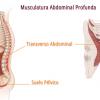 Musculatura Abdominal Profunda